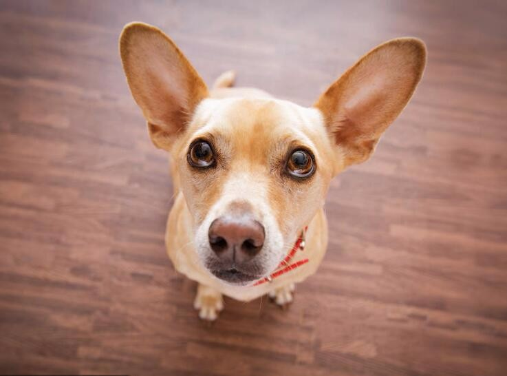 003-【生物】为什么马戏团的小狗能算算术?