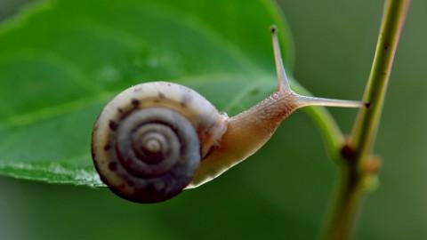 自我介绍-我是蜗牛,但是我在慢慢成长