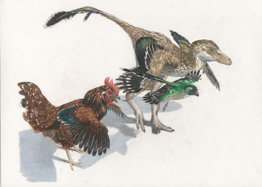 第五讲:恐龙复活:恐龙的DNA竟然能从鸡还原?